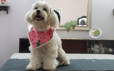 8 pasos para vestir en navidad a tus mascotas ¡Lindos cuellos!